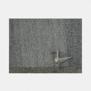 Birger Kaipiainen, Kuovi sateessa / Lintu sateessa, Arabia
